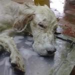 Tao, cane abbandonato tra i rifiuti